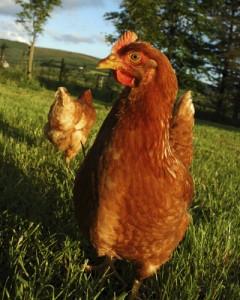 veganism-drepturile-animalelor2