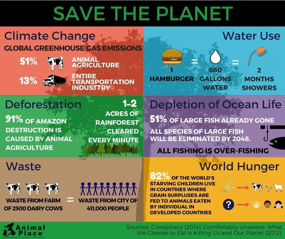 cum afecteaza industria animalelor mediul inconjurator?