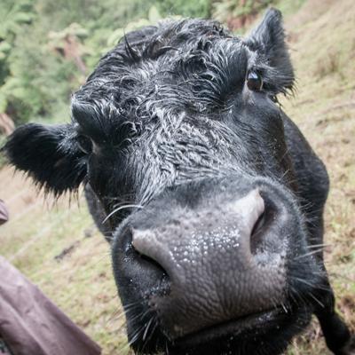 veganism-drepturile-animalelor3