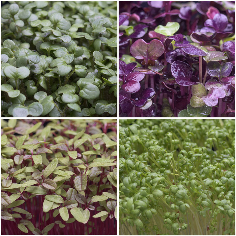 Mix-Carnivorex-microplante-livrare-online