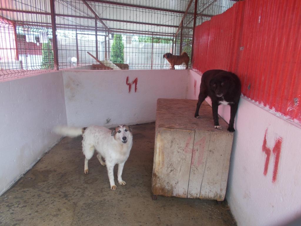 adoptia cainilor fara stapan