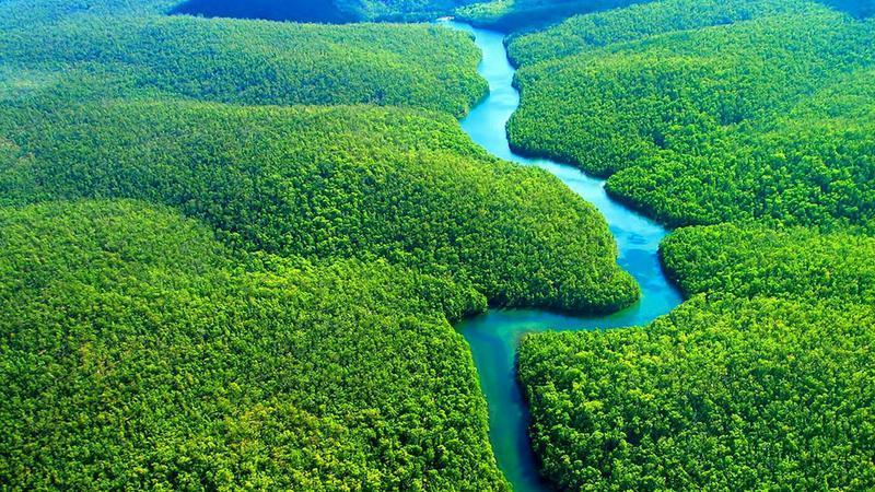 Protejează Pădurea Amazoniană!